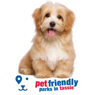 CT-PetFriendly-large