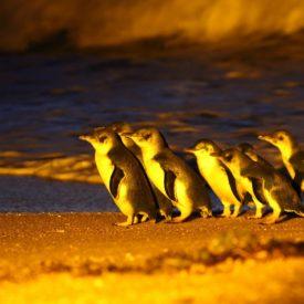 8 Penguin Tours