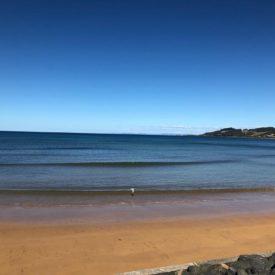 Beach Pengiun